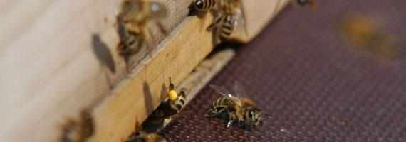 Herbst im Bienenvolk